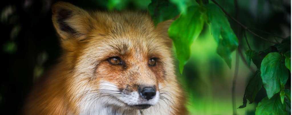 nova foxbit