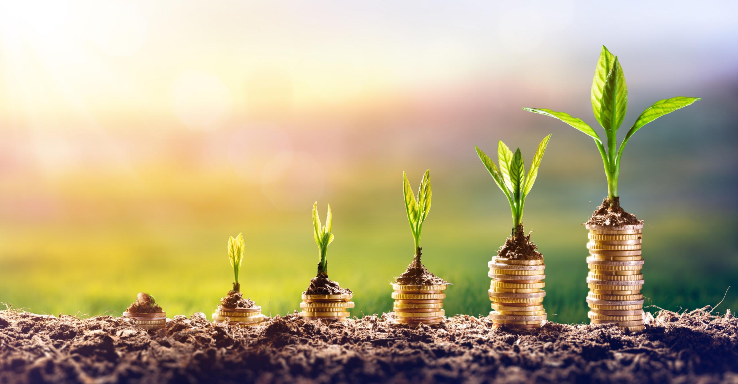 Como investir: faça seu dinheiro trabalhar para você