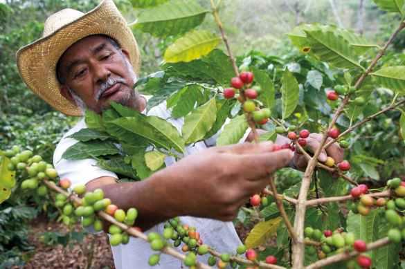 fazendeiros de café usando blockchain