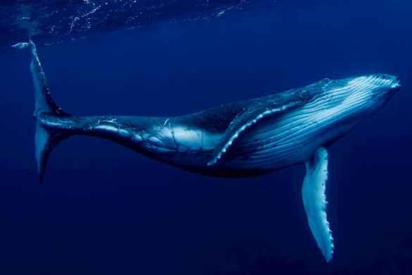 baleia move bilhões por centavos