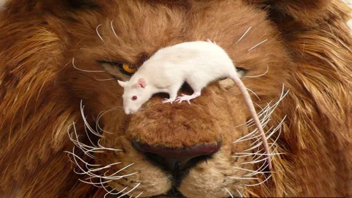 """Cuidado com """"pega-ratão"""" da Receita na hora de declarar suas criptomoedas"""