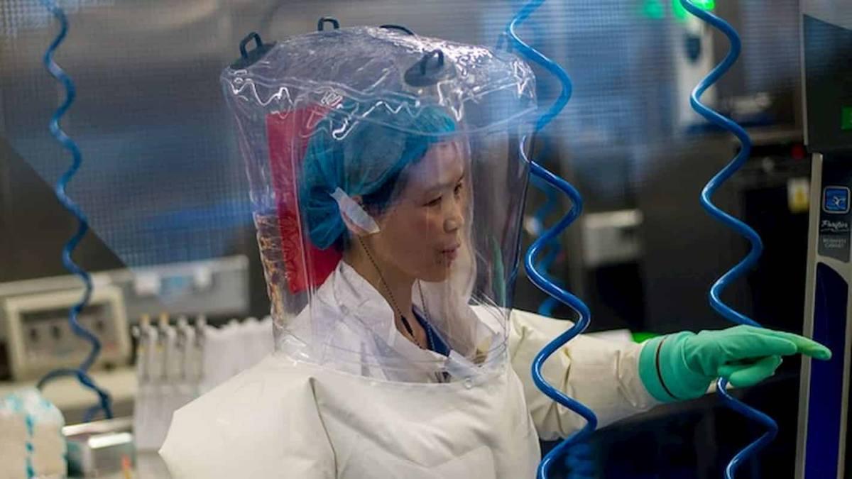 """'Mulher Morcego' da China: """"Coronavírus é apenas a ponta do iceberg"""""""
