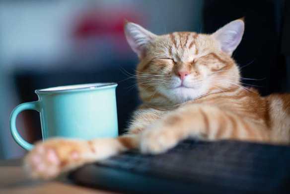 Gato dormindo em cima do teclado ao lado de uma caneca de café