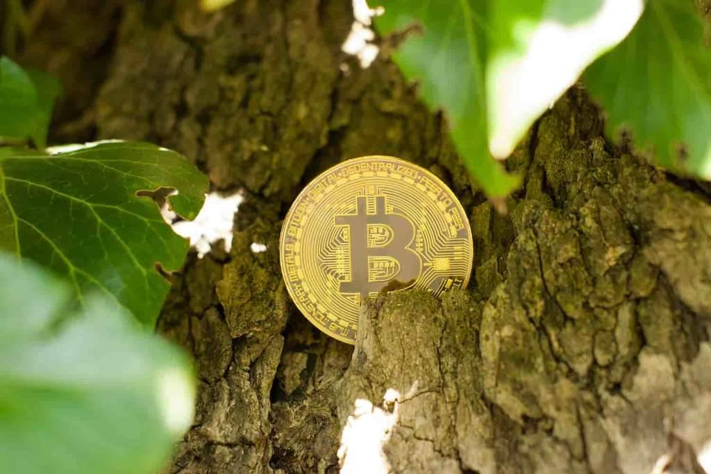 Bitcoin natureza bate 50 mil