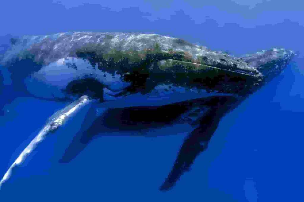 Baleias comprando mais bitcoin