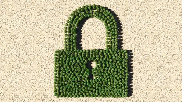 Cutcoin privacidade verde