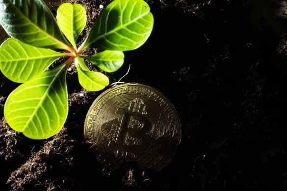 5 coisas bitcoin