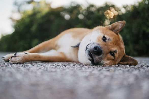 Dogecoin triste