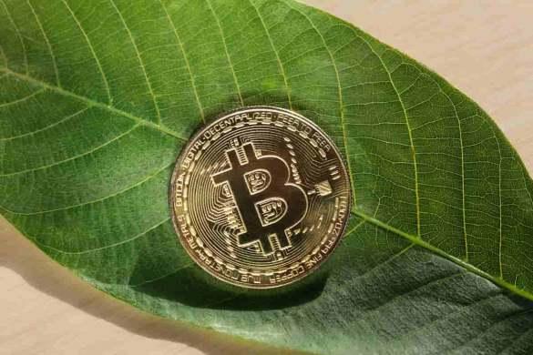 Moeda de bitcoin em uma folha verde