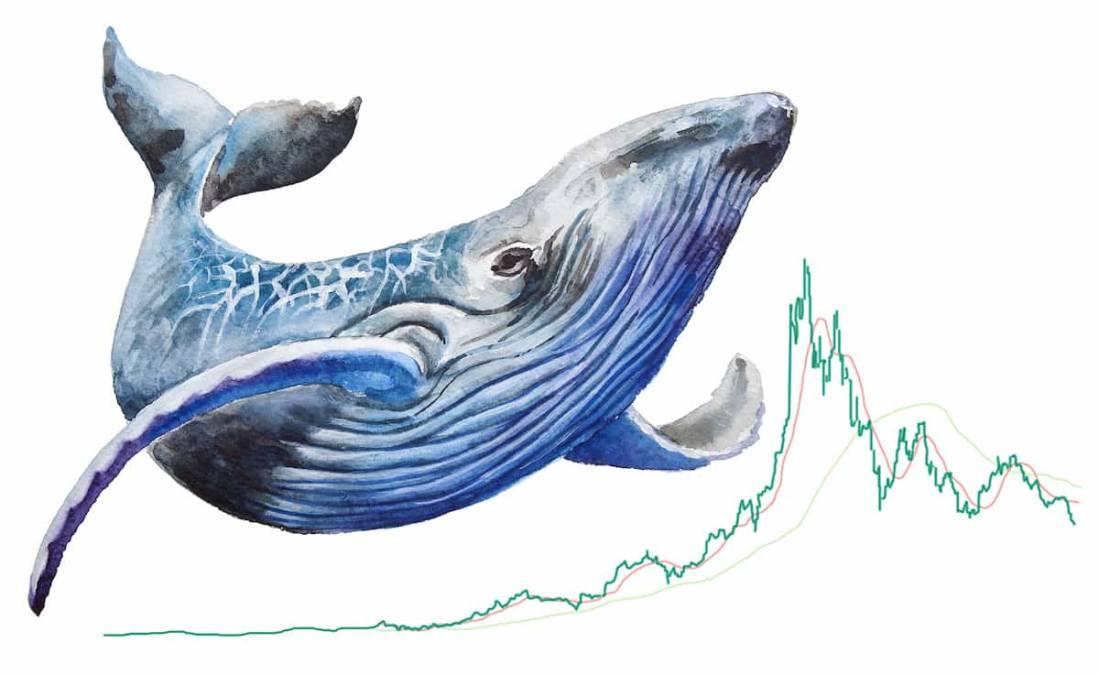 Baleia movimenta R$ 2 bilhões em bitcoin e paga só R$ 424 em taxas