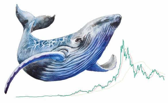 Baleia paga